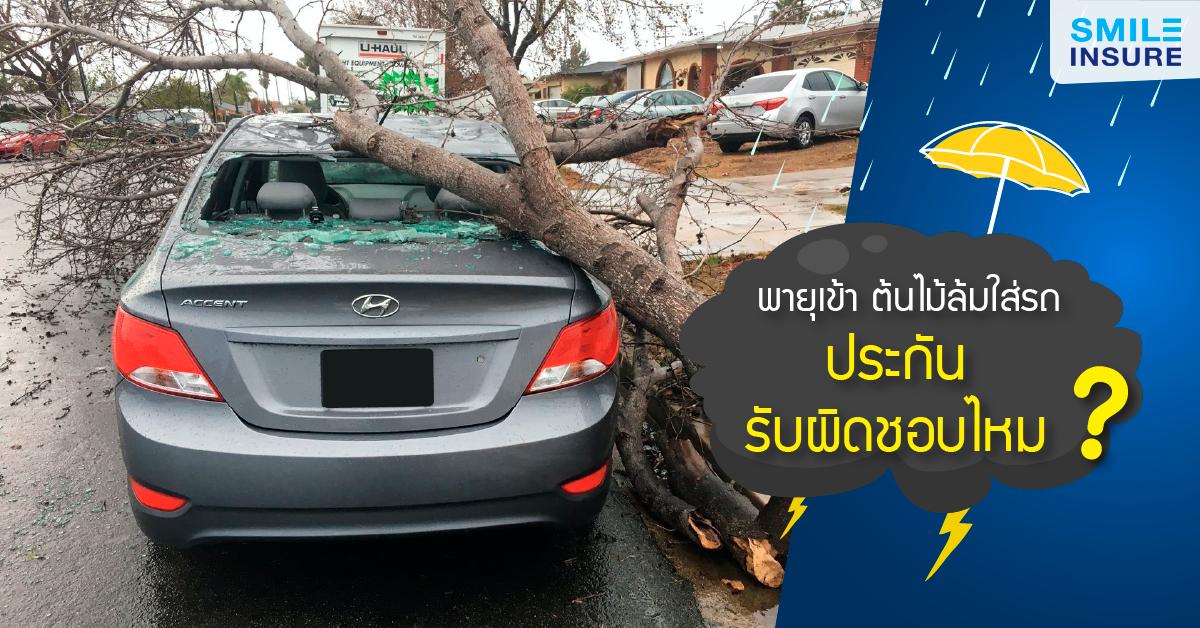 พายุเข้า ต้นไม้ล้มใส่รถ ประกันรับผิดชอบไหม?