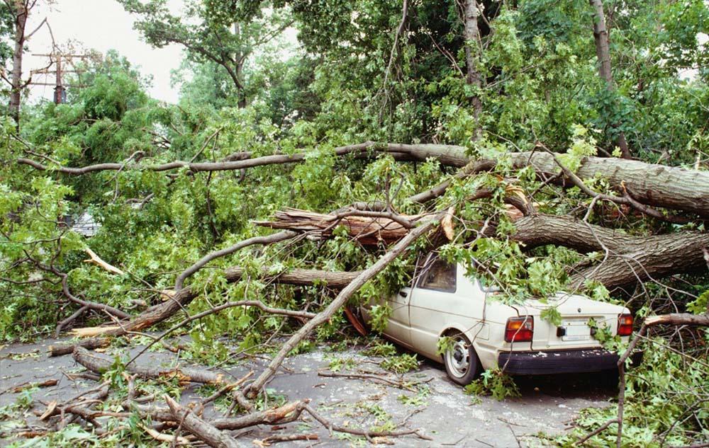 พายุเข้า ต้นไม้ล้มใส่รถ ประกันรับผิดชอบไหม │Smile Insure