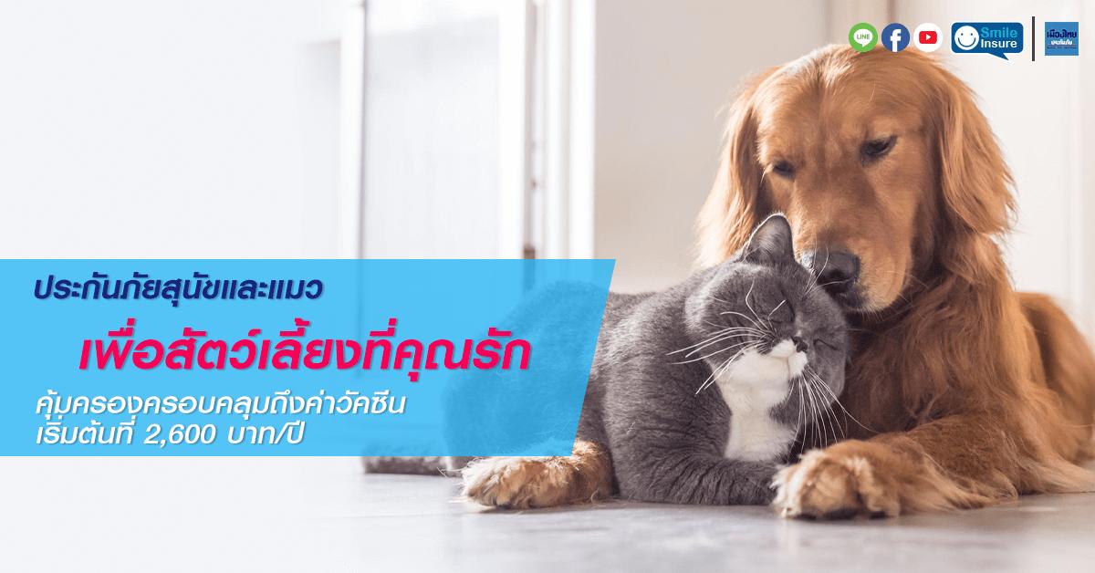 ประกันภัยสัตว์เลี้ยง เมืองไทย Cats & Dogs